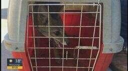 Filhote de raposa é resgatado em Araraquara pelo Daae