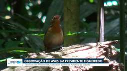 Presidente Figueiredo aposta em potencial como local para observação de aves