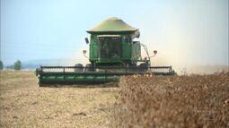 Agricultores se animam com safrinha de milho no Sul do MA