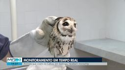 Centro de Biodiversidade em Ipatinga se transforma em nova casa para animais resgatados