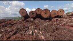 Pará tem o maior índice de desmatamento da Amazônia Legal