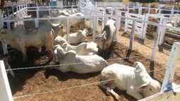 Venda do gado de elite é um dos destaques da Exposertão em São João dos Patos