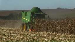 Começa a colheita da segunda safra de milho no Paraná