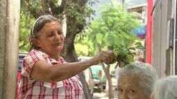 A cura pela fé. A tradição das rezadeiras de Maranguape