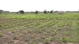 Produtores rurais estão ansiosos com aumento de colheita no Vale do Pindaré