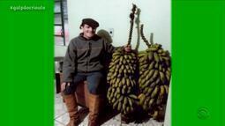 Família da Caibaté colhe cacho de banana de 26kg