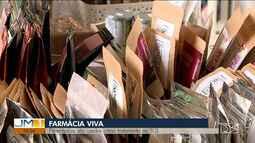 Uso de ervas medicinais auxiliam no tratamento de doenças custeadas no SUS no MA