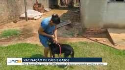 Cães e gatos são vacinados em Acrelândia