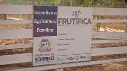 Projeto incentiva o cultivo de frutas