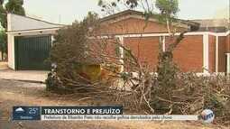 Prefeitura de Ribeirão Preto deixa de recolher galhos derrubados por chuva