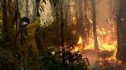 Incêndio que atingiu o horto florestal em Avaré pode ter sido criminoso