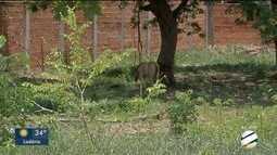 Égua pariu em terreno baldio em Corumbá