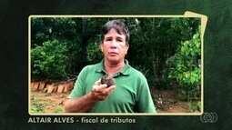 Veja imagens enviadas pelos telespectadores do Jornal do Campo de Goiás