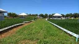 Mirante Rural mostra que coronavírus ameaça agronegócio no Sul do MA