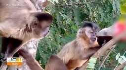 Vídeo mostra macacos na Praça Tamandaré, em Goiânia