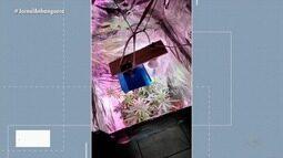 Polícia prende 'entregador de drogas' em Aparecida de Goiânia