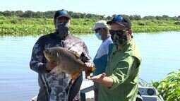 Frutas do barranco viram ascas naturais para a pescaria de pacu no Rio Paraguai