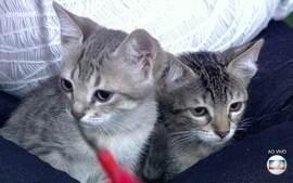 Voluntários resgatam gatos na rua e promovem adoção
