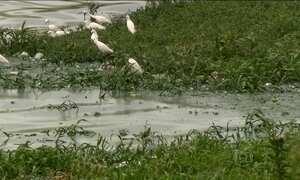 Governo de SP deve retirar água de represa poluída