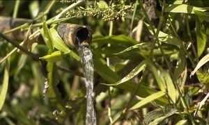 Crise hídrica poderá ser combatida com mata em torno de nascentes