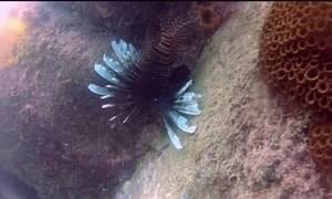Predador ameaça vida marinha no litoral do Rio de Janeiro