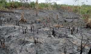 Desmatamento é apontado como uma das causas das mudanças climáticas