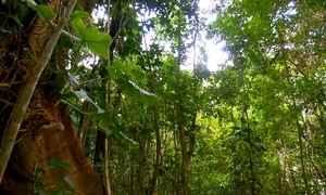 Fantástico encontra o maior mamífero terrestre brasileiro em seu habitat
