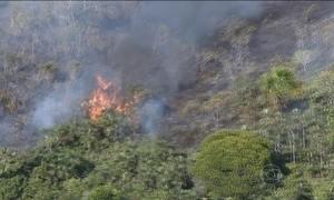 Incêndio destrói parque nacional e reserva indígena no Amazonas