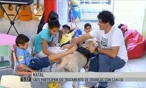 Cães ajudam crianças na luta contra o câncer em Natal