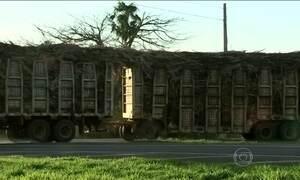 Caminhões gigantescos com cana de açúcar desrespeitam a lei em SP