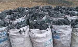 Jornal Hoje flagra produções ilegais de carvão em Alagoas