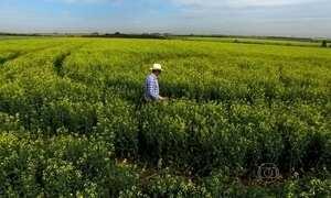 Agricultores deixam o Brasil para fazer fortuna em terras paraguaias