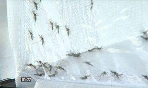 Organização Pan-Americana de Saúde faz alerta sobre o Zika vírus