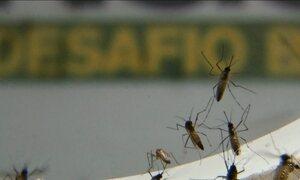 Pesquisadores descobrem zika vírus na saliva e urina de pessoas infectadas