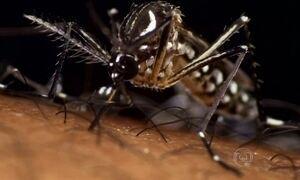 Cientistas explicam por que os mosquitos transmitem tantas doenças