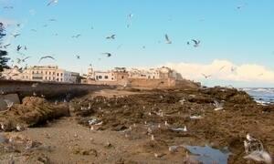 Essaouira tem mercado de ervas afrodisíacas e porto de gaivotas