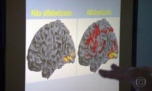 Células do cérebro ganham movimento e luz após alfabetização