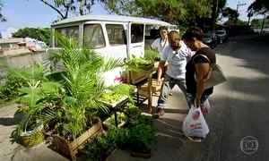 Hortas ocupam espaços improváveis, como laje e Kombi