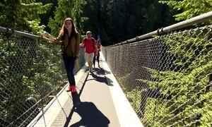 Ponte suspensa permite caminhar sobre os maiores pinheiros do mundo