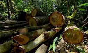 Pernambuco tem apenas 3% da Mata Atlântica preservados, calcula ONG