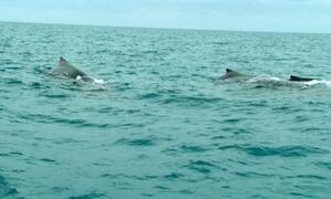 Hoje é dia de Abrolhos: baleia jubarte