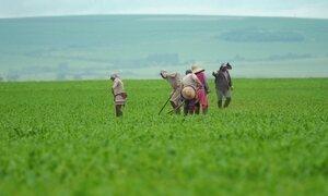 'Fonte da juventude': a produção de orgânicos em larga escala