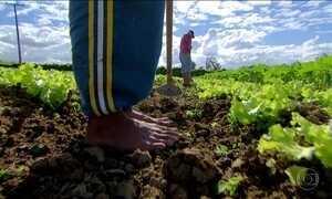 MP critica sigilo de lista de empresas que exploram trabalho escravo