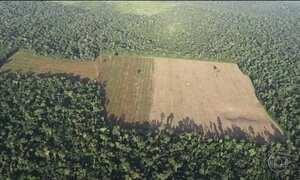 Desmatamento na Floresta Amazônica cresceu 30% em 2016