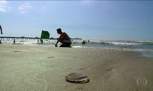Águas-vivas ferem mais de 60 mil nas praias do PR e SC neste verão