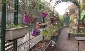 Hortas coletivas em Paris