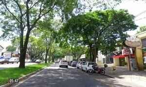 Árvores ajudam a amenizar os efeitos causados pelas ilhas de calor no PR
