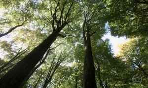 Alemão defende que árvores se ajudam, conversam e se apaixonam