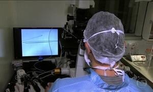 Porcos serão doadores de órgãos para humanos, diz pesquisa dos EUA