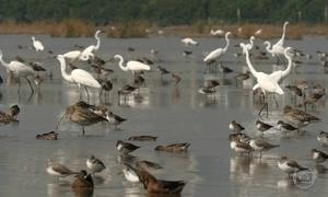 Reserva natural na costa sul da China abriga 400 espécies de aves